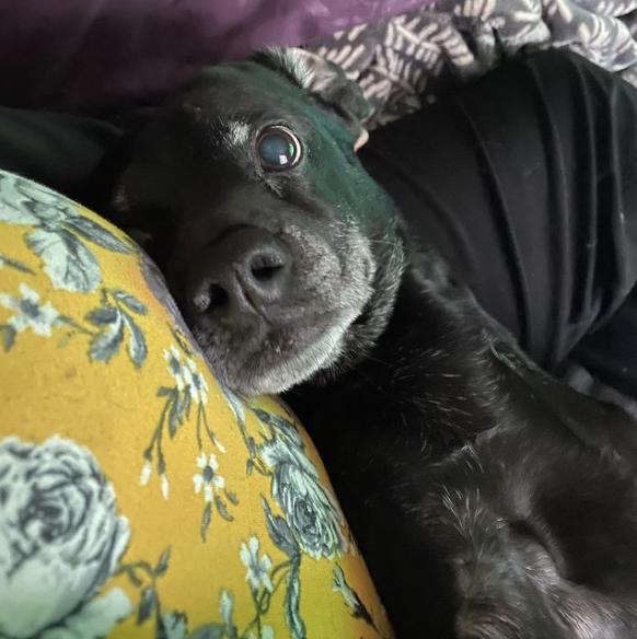 Loving stares